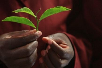 Lipton® et le développement durable