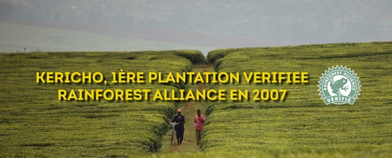 1ère plantation Rainforest Alliance en 2007
