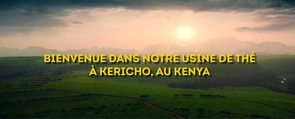 Notre usine de thé à Kericho, Kenya
