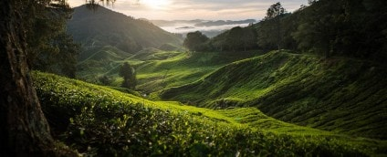 Loving Our Tea Farmers