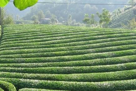 Dünden Bugüne Lipton® Çay
