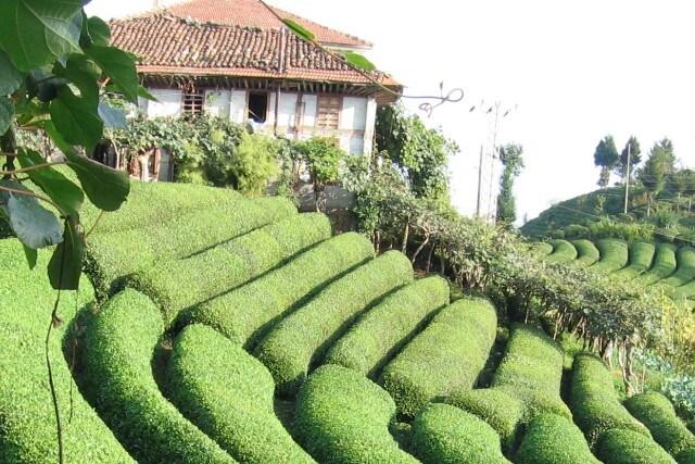 Sürdürülebilir Çay Tarım Projesi