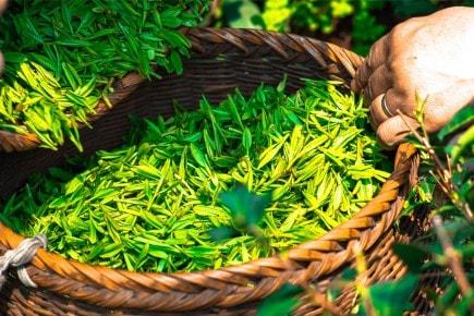 История чая Lipton®